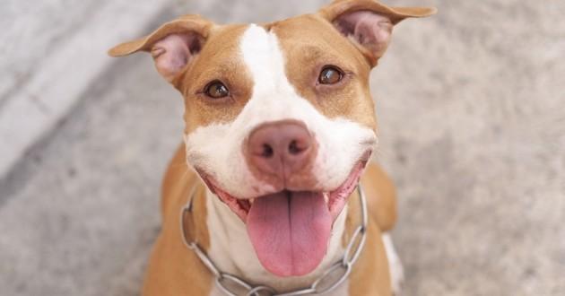 Un jeune chien sauvé après avoir passé 8 jours dans une tempête