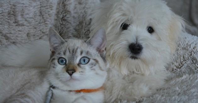 chien et chat collés