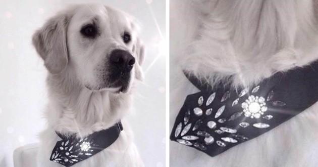 DIY collier pour chien fait avec une cravate