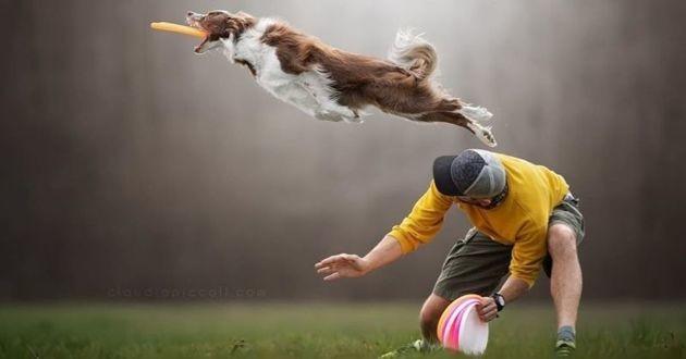 saut frisbee chien