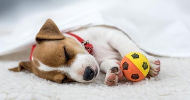 chien qui dort hiver avec balle