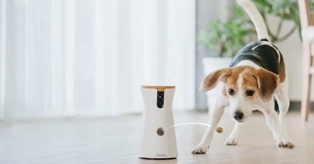 furbo objets connectés chiens