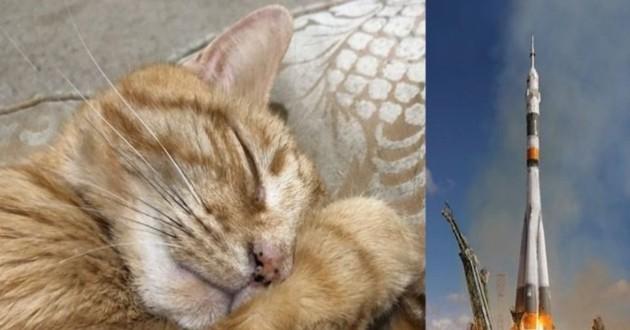 un chat qui sort à côté d'une image de fusée