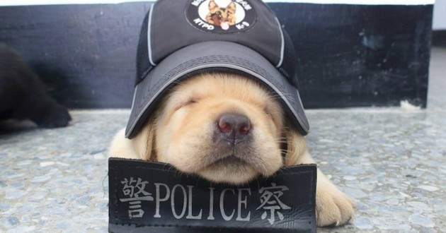 chiot taiwan police