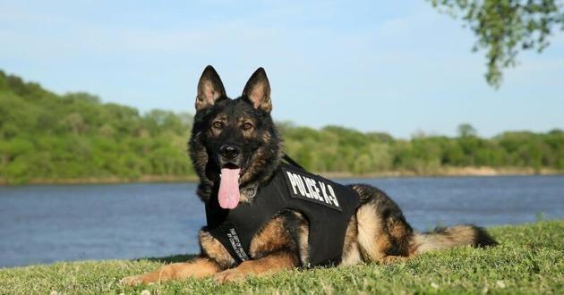Gabo chien policier héros