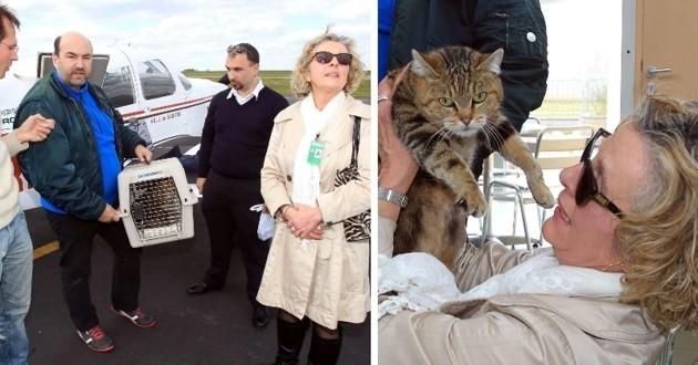 Chat livré par avion pour éviter l'euthanasie