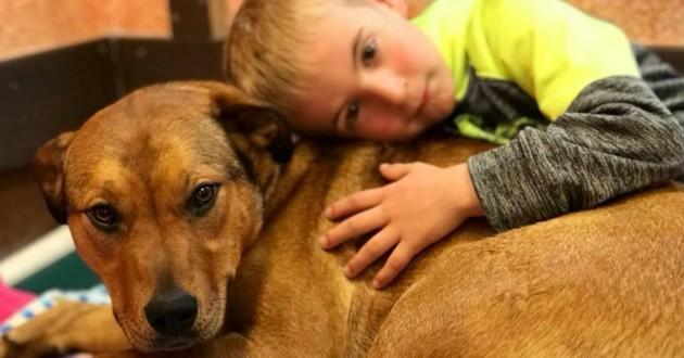 garçon sauvetage chiens enfant