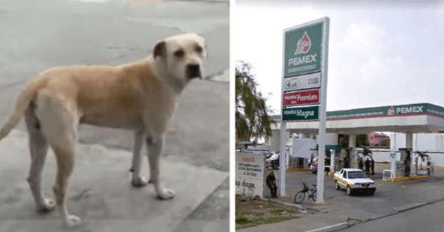 photo du chien et de la station de service