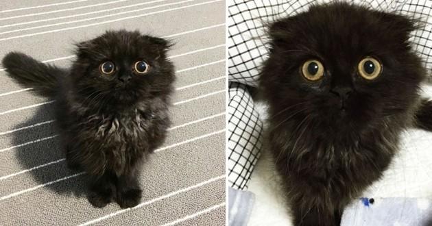 ALERTE : le regard étonné de cet adorable chat va vous faire craquer !