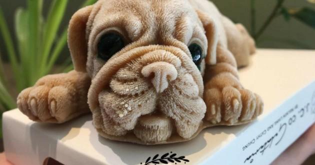 café glaces chien chiot