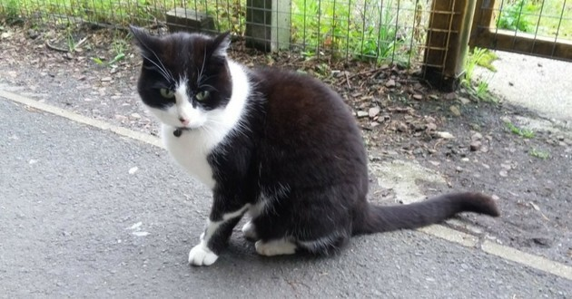 chat glasgow gare hopital