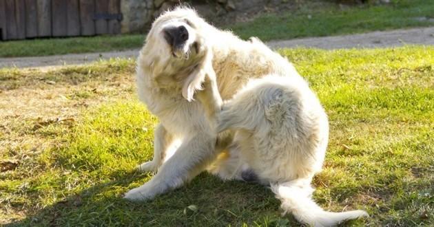 chien qui se gratte se mutile