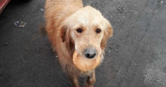 chien pain
