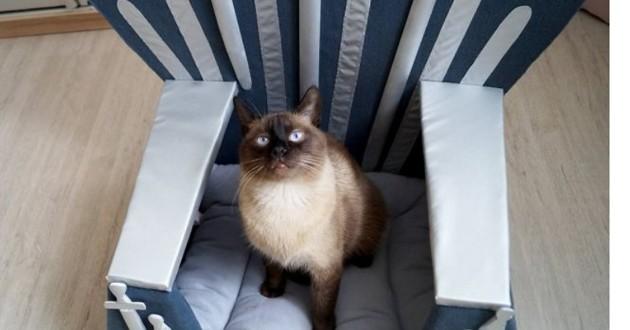 trône de fer pour chat