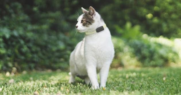 pet tracker GPS invoxia wamiz chat