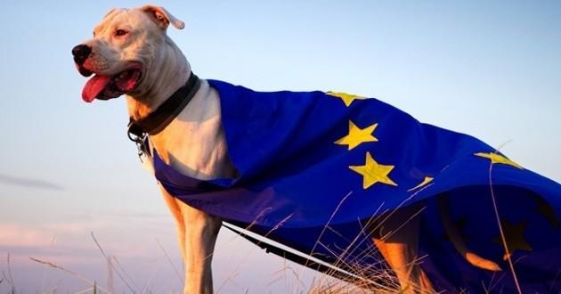 chien qui porte un drapeau de l'union européenne