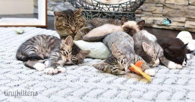 un vieux chat avec des chatons