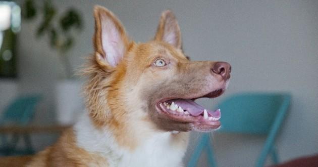 chien mauvaise haleine