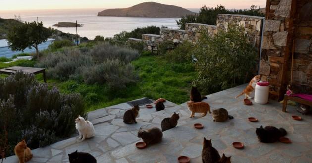 refuge chats grece syros