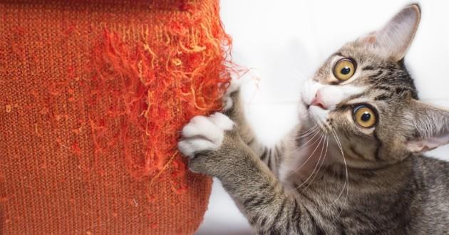 chat qui griffe de manière excessive