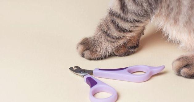 chat avec un coupe griffes
