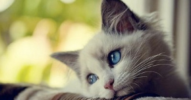 griffures de chat nocives pour la santé