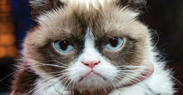 Grumpy Cat, le chat vedette d'Internet, est mort