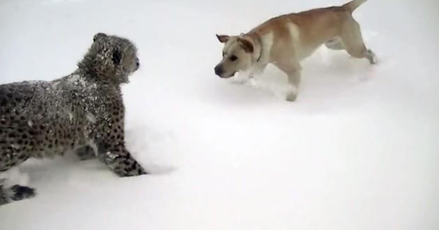 chien guépard neige