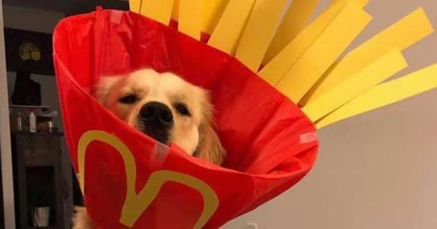 Gus déguisé carton de frites de McDonald's