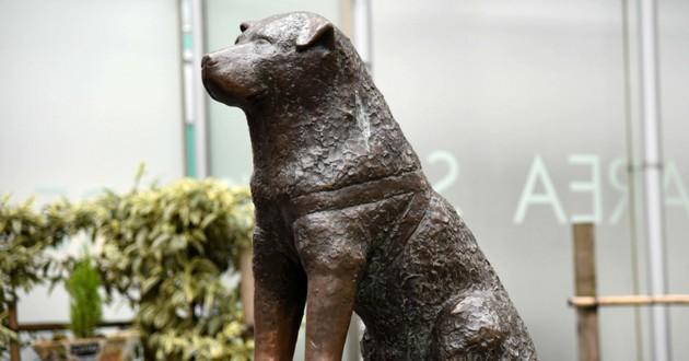 Hachiko chien chat japon