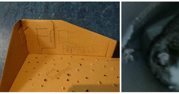 hamster boite carton