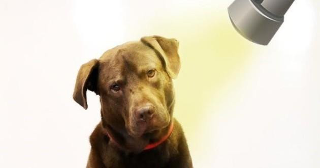 chien criminel accusé