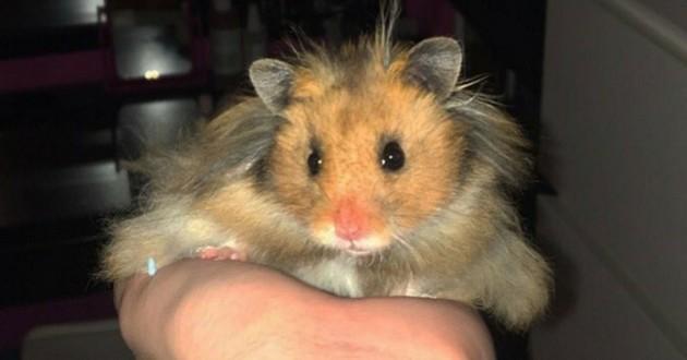 hamster chip twitter