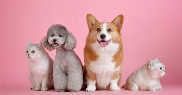 Un groupe de chiens et de chats