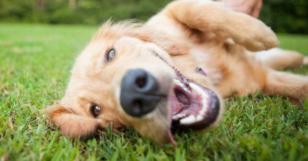 chien content dans l'herbe