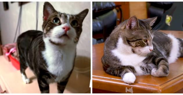 herbie chat bébé