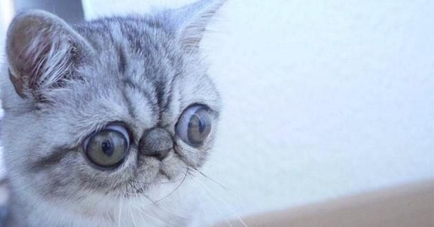 Herman, le chat constamment triste et nouvelle star du Web