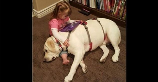 Un labrador sauve une petite fille