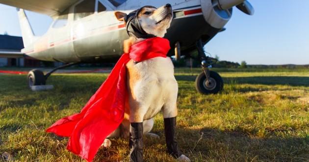 un chien héros qui pose en cape devant un avion