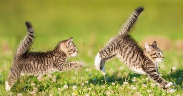 chats qui jouent dehors