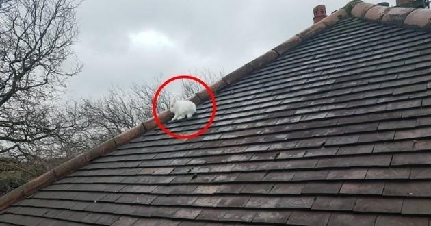lapin sur un toit