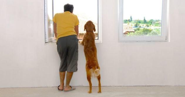 un homme et un chien à la fenêtre