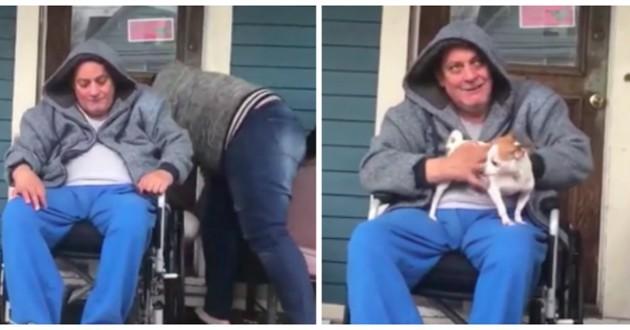 chien avec homme en fauteuil roulant