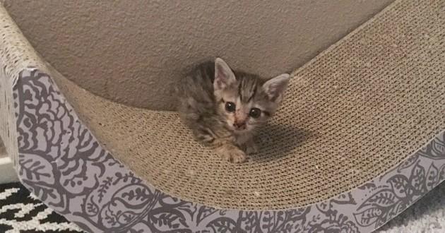 minuscule chaton