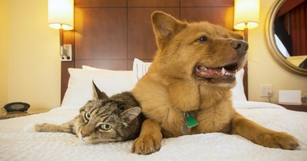 un chat et un chien à l'hotel