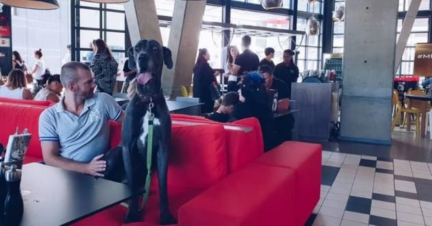 hotel pour chiens et chats