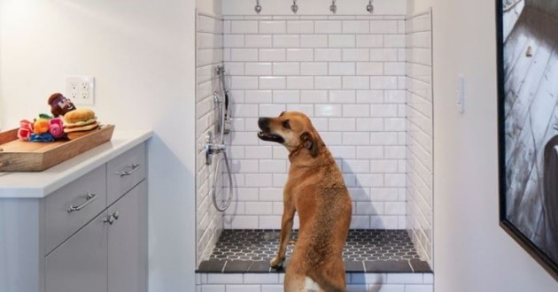 aménagements chien