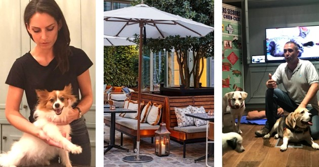 hoxton hotel chiens