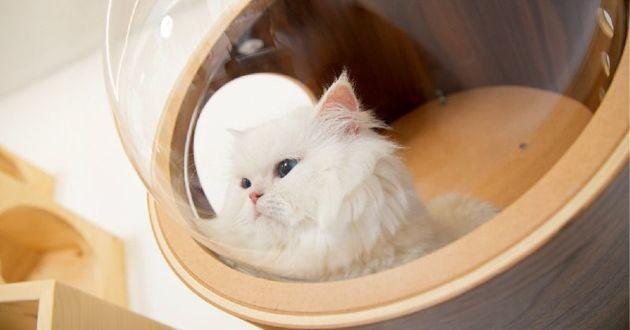 chat dans une niche MYZOO