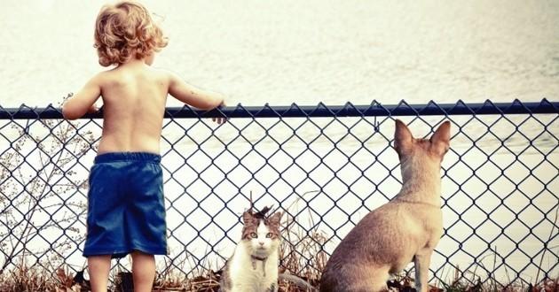 Chats, chiens et autres quatre pattes seraient-ils trop humanisés ?